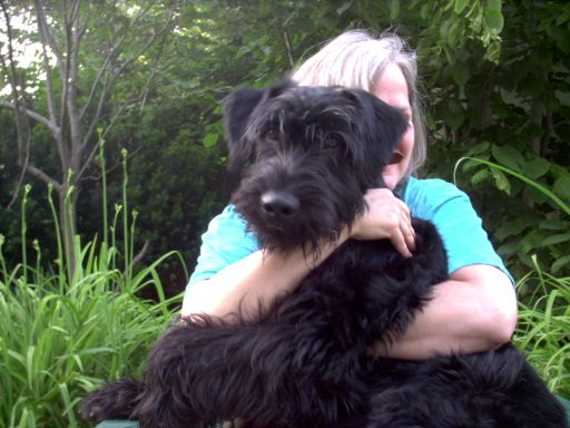 Giant schnauzer puppy rescue